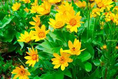 Yellow wildflowers Stock Photos