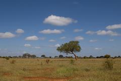african savannah - stock photo