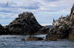 Gull island shorebird sanctuary Stock Photos