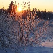 Hoar frost at sunset - stock photo