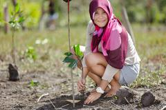mangrove reforestation - stock photo