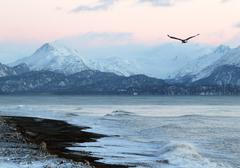 Alaskan beach at sunset with flying eagle Stock Photos