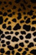 Pattern of a tiger skin Stock Photos
