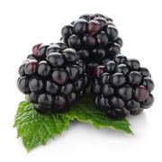 fresh berry blackberry - stock photo