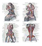 4 views of the human head, torso  and lungs .. - stock illustration