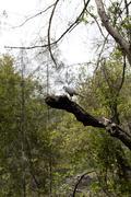 Hawk bird of prey sitting on branch Stock Photos