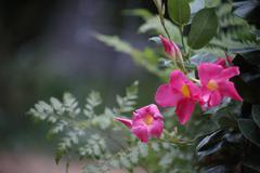 tropical flowers.jpg - stock photo