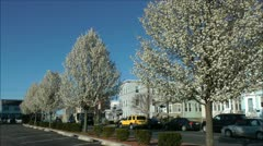 Magnolia Blossom trees street traffic Stock Footage