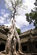 Ta prohm tree Stock Photos