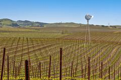 vineyard with windmill and blue sky - stock photo
