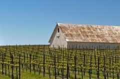 White barn in vineyard Stock Photos