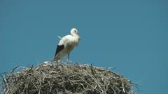 White Stork (Ciconia ciconia) Stock Footage