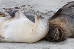 Sea Lions - stock photo