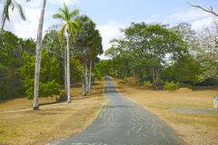 Colorful trees by the road in panama during autumn time Stock Photos