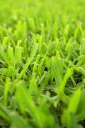 Short Cut Grass Stock Photos