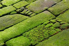 rocks covered in green algae - stock photo