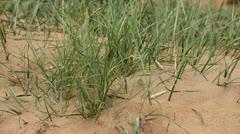 Dunes Stock Footage