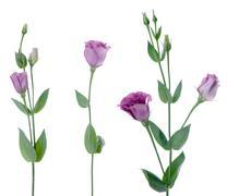 beautiful violet flower - stock photo