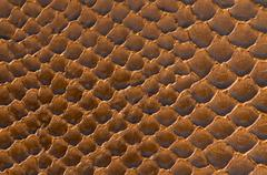 Brown snake skin background Stock Photos