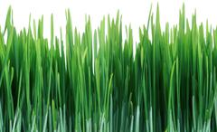 green grass seamless tile tiling repeating isolated - stock photo