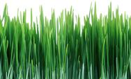 Green grass seamless tile tiling repeating isolated Stock Photos