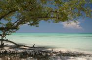 Caribbean beach tree Stock Photos