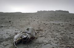 Desert carcass - stock photo