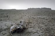 Stock Photo of Desert carcass