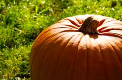 Stock Photo of large pumpkin