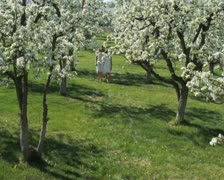 Mother and daughter walking through a flowering orchard Stock Footage