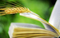 Wheat spike on open book Stock Photos