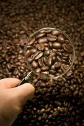 Coffee bean inspection Stock Photos