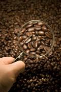 coffee bean inspection - stock photo
