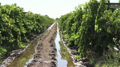 Agriculture/ Wine Stock Footage