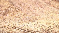 sawdust - stock footage