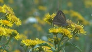 Stock Video Footage of Flowers and insects