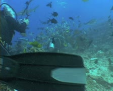 Scuba divers under water Stock Footage