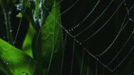 Stock Video Footage of Droplets on Spiderweb in Breeze