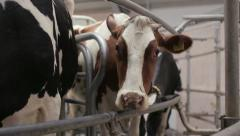 Automated Dairy Farm 2 Stock Footage