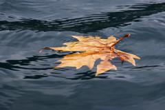 Floating leaf over lake Albano Stock Photos