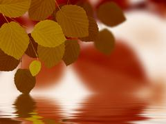 Leaves reflecting in water Stock Illustration