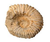 Brazilian ammonite fossil on white Stock Photos