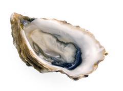 Single oyster on white Stock Photos
