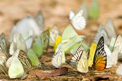 Butterfly swarm Stock Photos