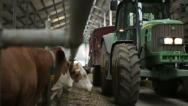 Stock Video Footage of Dairy cows in the stable and tractor