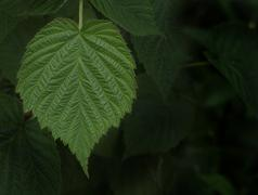 Leaf in forest - stock photo
