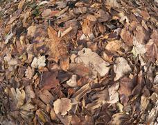 fisheye winter leaves background - stock photo