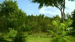 Trees - stock footage