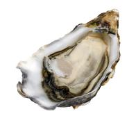 single oyster on white - stock photo