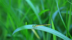 Damselfly and black spider Stock Footage